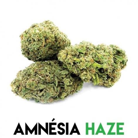 Fleurs CBD pour pot pourri Amnesia