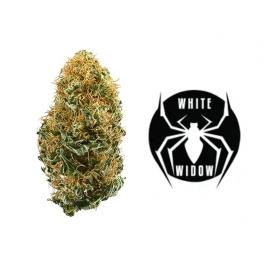 Fleurs de CBD pour pot pourri White Widow